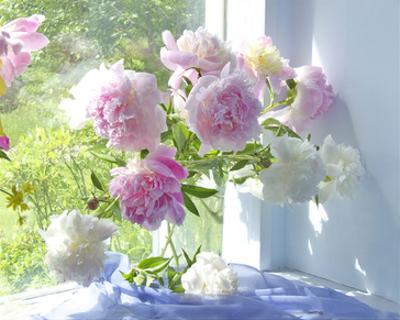 Peony Bouquet by Judy Stalus