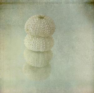 Sea Urchin by Judy Stalus