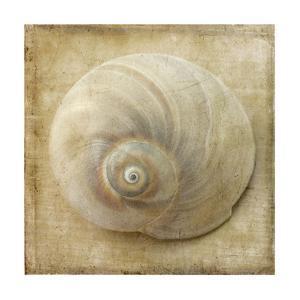 Sepia Shell VI by Judy Stalus