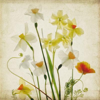 Spring Garden I by Judy Stalus