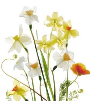 Spring Garden II by Judy Stalus