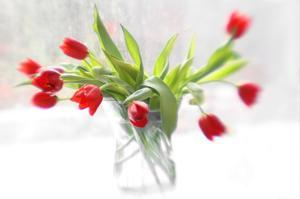 Tulips in Winter by Judy Stalus