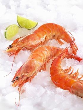 Shrimp on Ice by Jürgen Holz