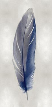 Blue Feather on Silver II by Julia Bosco