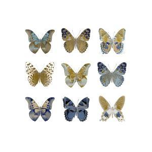 Butterfly Study I by Julia Bosco