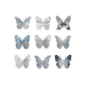 Butterfly Study II by Julia Bosco