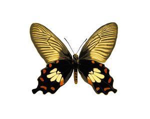 Butterfly with Orange by Julia Bosco