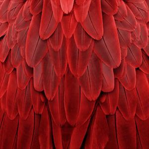 Feathered Friend - Red by Julia Bosco