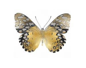 Golden Butterfly I by Julia Bosco