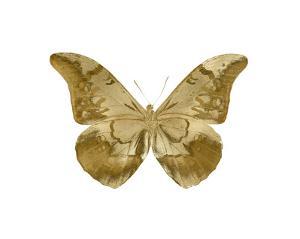 Golden Butterfly III by Julia Bosco