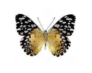 Golden Butterfly IV by Julia Bosco