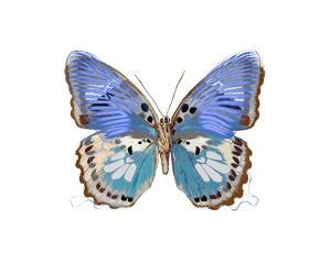 Golden Butterfly V by Julia Bosco