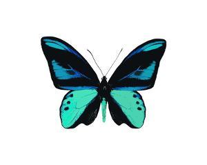 Vibrant Butterfly I by Julia Bosco