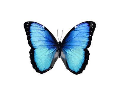 Vibrant Butterfly II by Julia Bosco
