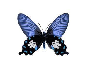 Vibrant Butterfly III by Julia Bosco