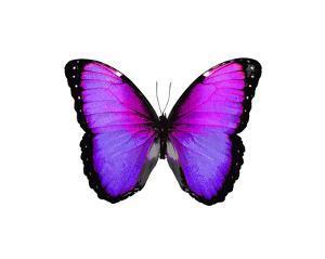 Vibrant Butterfly IV by Julia Bosco