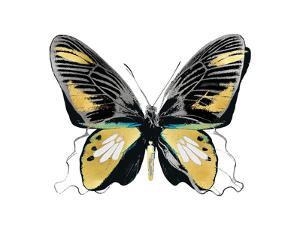 Vibrant Butterfly VI by Julia Bosco