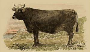 Antique Cow V by Julian Bien