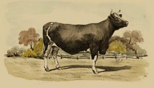 Antique Cow VI by Julian Bien