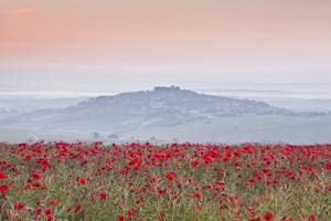 A Colourful Display of Poppies Above the Village of Sancerre in the Loire Valley by Julian Elliott