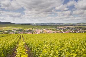 Champagne Vineyards Above the Village of Baroville in the Cote Des Bar Area of Aube by Julian Elliott