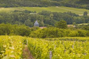 Champagne Vineyards Above the Village of Chervey in the Cote Des Bar Area of Aube by Julian Elliott