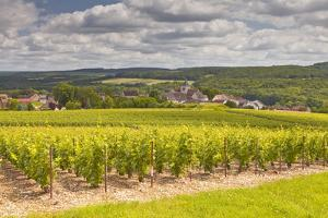 Champagne Vineyards Above the Village of Landreville in the Cote Des Bar Area of Aube by Julian Elliott