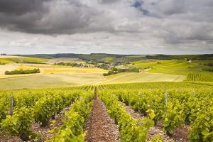 Champagne Vineyards Above the Village of Noe Les Mallets in the Cote Des Bar Area of Aube by Julian Elliott
