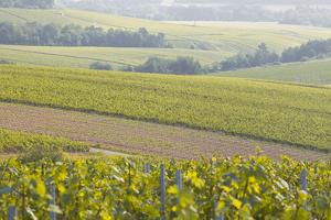 Champagne Vineyards in the Cote Des Bar Area of the Aube Department Near to Les Riceys by Julian Elliott