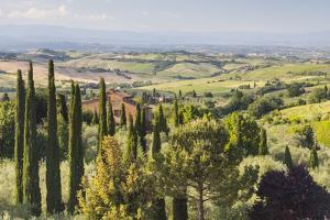 Scenery Near to Montepulciano, Val D'Orcia, UNESCO World Heritage Site, Tuscany, Italy, Europe by Julian Elliott