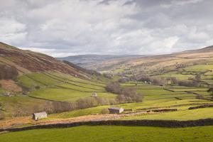Swaledale in the Yorkshire Dales National Park, Yorkshire, England, United Kingdom, Europe by Julian Elliott