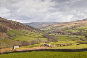 Swaledale in the Yorkshire Dales National Park, Yorkshire, England, United Kingdom, Europe by Julian Elliott