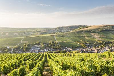 The vineyards of Sancerre above Chavignol, Cher, Centre, France, Europe by Julian Elliott