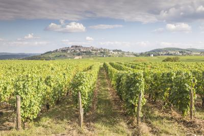 The vineyards of Sancerre, France. Known for its fine wines from grape varities such as pinot noir  by Julian Elliott