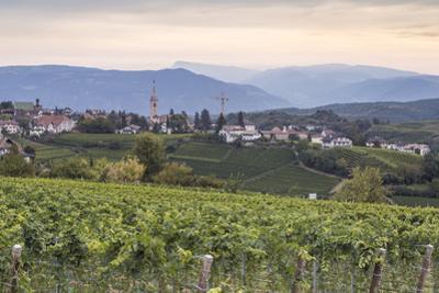 Vineyards near to Caldaro, South Tyrol, Italy, Europe by Julian Elliott