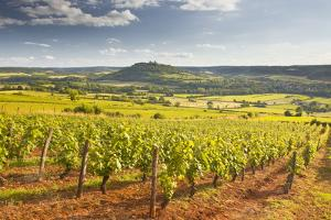 Vineyards Near to the Beaux Village De France of Vezelay in the Yonne Area by Julian Elliott