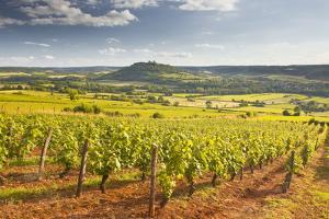 Vineyards Near to the Beaux Village De France of Vezelay in the Yonne Area by Julian Elliott
