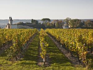 Vineyards Near to the Chateau of Chinon, Indre-Et-Loire, Loire Valley, France, Europe by Julian Elliott
