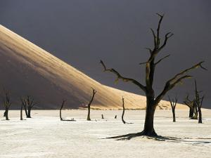 Blackened Camelthorn Trees in Dead Vlei, Near Sossusvlei, Namibia by Julian Love