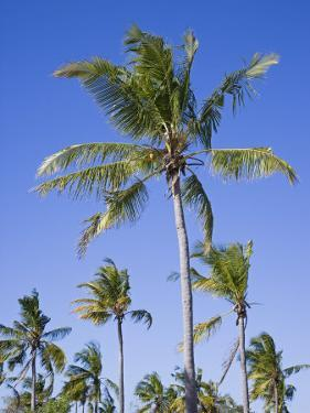 Palm Trees on Ibo Island, Part of the Quirimbas Archipelago, Mozambique by Julian Love