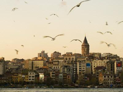 Seagulls Flock Above the Golden Horn, Istanbul, with the Galata Tower in the Background