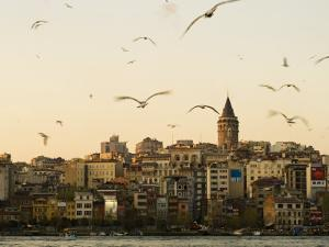 Seagulls Flock Above the Golden Horn, Istanbul, with the Galata Tower in the Background by Julian Love