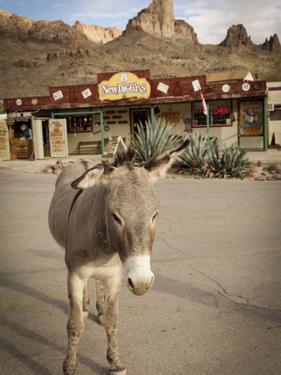 Route 66, Oatman, Arizona, USA by Julian McRoberts