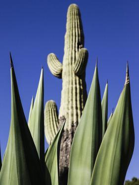 White Stallion Dude Ranch, Tucson, Arizona, USA by Julian McRoberts