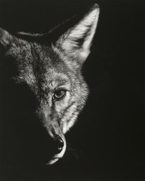 Black Glimpse VI by Julie Chapman