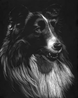 Canine Scratchboard VII by Julie Chapman