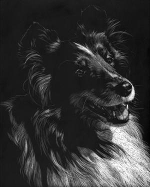 Canine Scratchboard XI by Julie Chapman