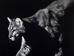 Prowler by Julie Chapman