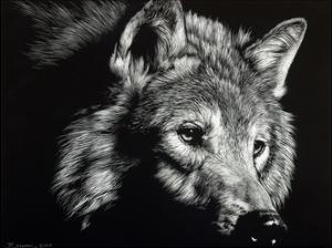 Wild Eyes by Julie Chapman