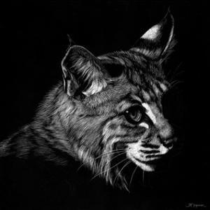 Wildlife Scratchboards IX by Julie Chapman
